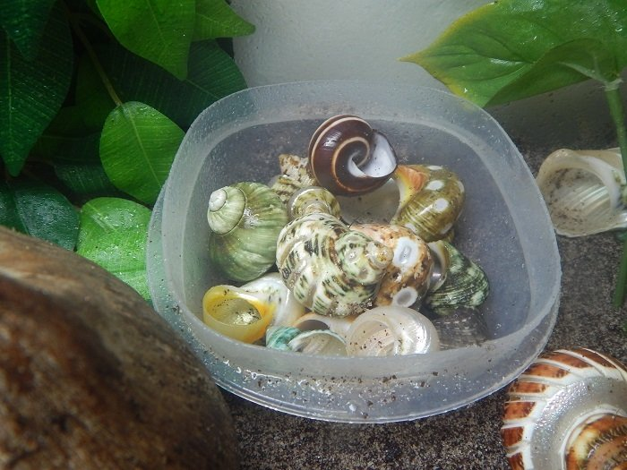 My Hermit Crab Molting