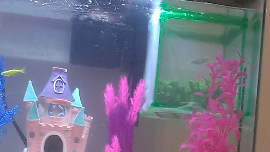 How Do I Take Care Of Baby Fry That Come From Glofish ...