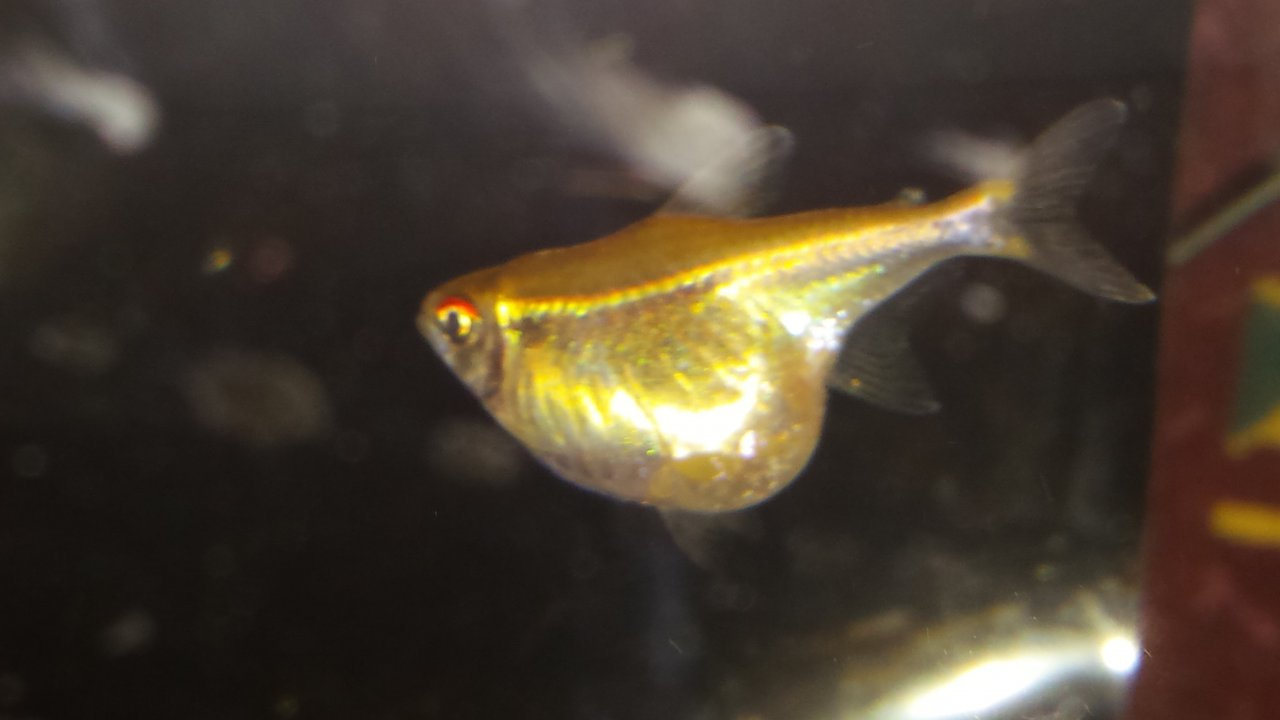 I Have Two Black Neon Tetras In My 30 Gallon Tank With A ...
