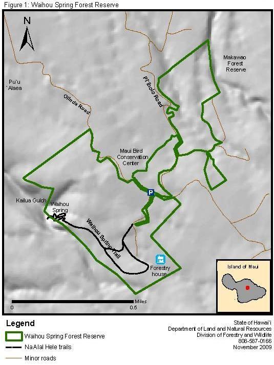 Forestry Programs Waihou Spring Forest Reserve