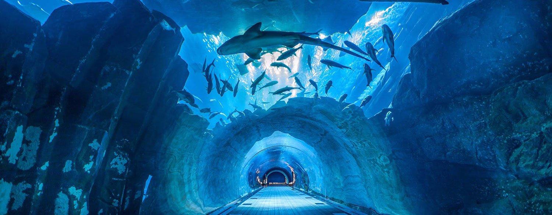 Dubai Aquarium And Under Water Zoo Tickets To Explore A