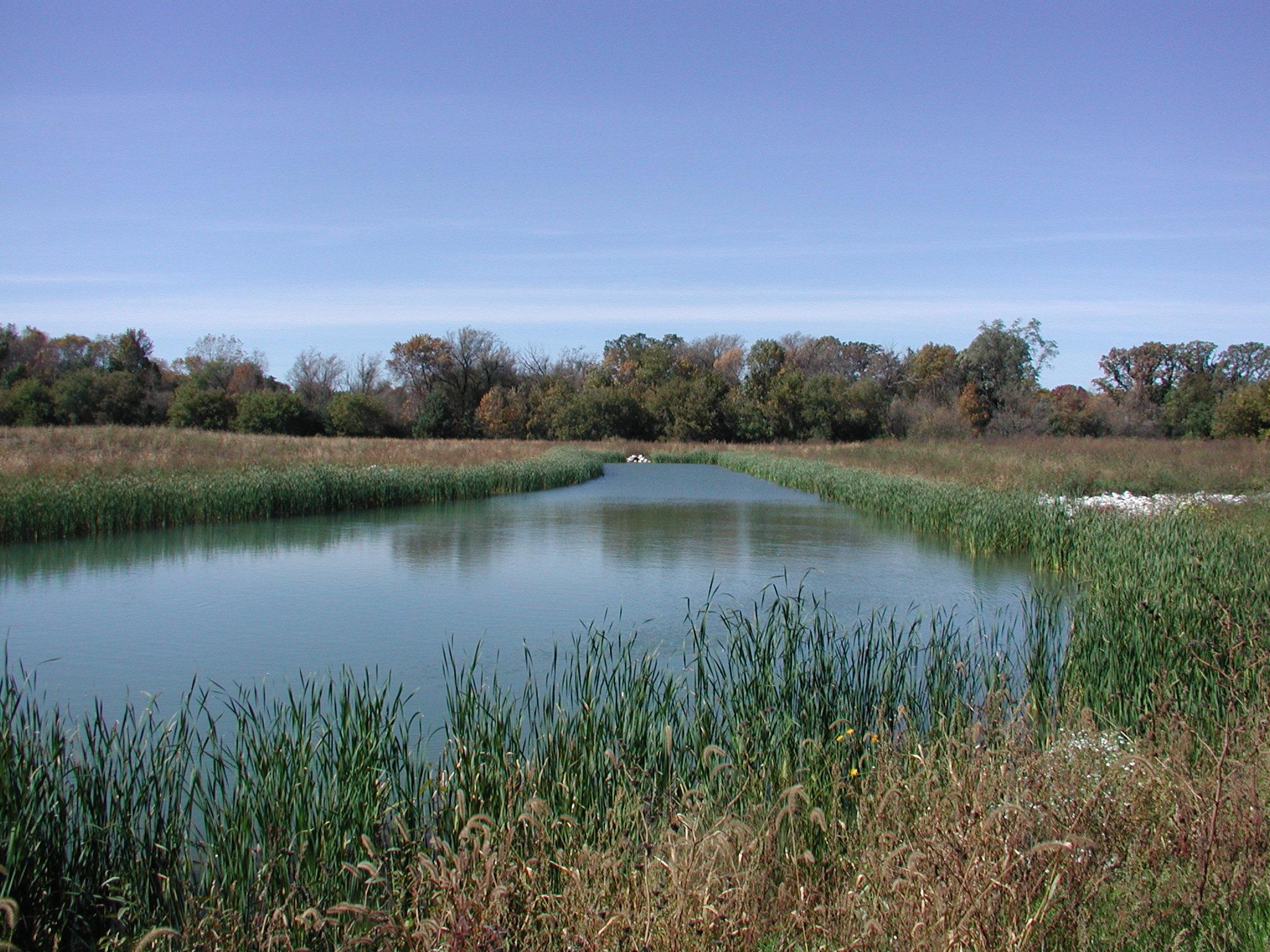Aquatic Pond Plants