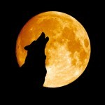Dog full moon