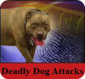 Fatal dog attack
