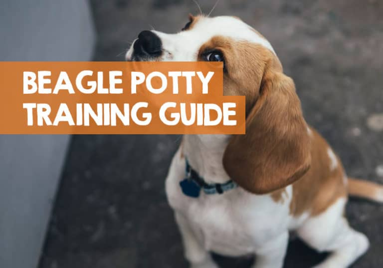 Easy English Bulldog Potty Training Tips That Will Save You A Lot Of Time