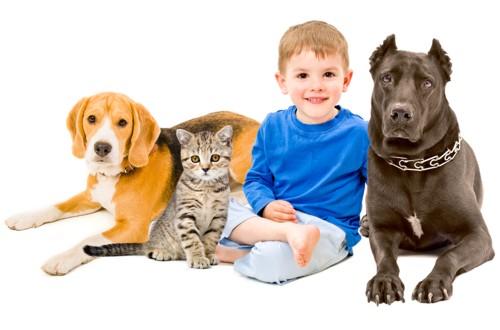 Socialização de um cão