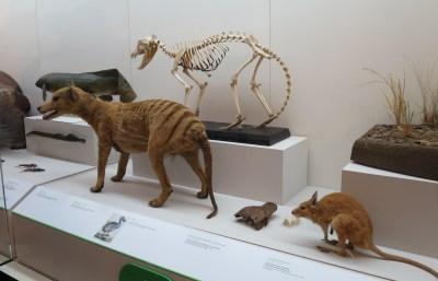 Dead as a dodo – The Return of Native Nordic Fauna
