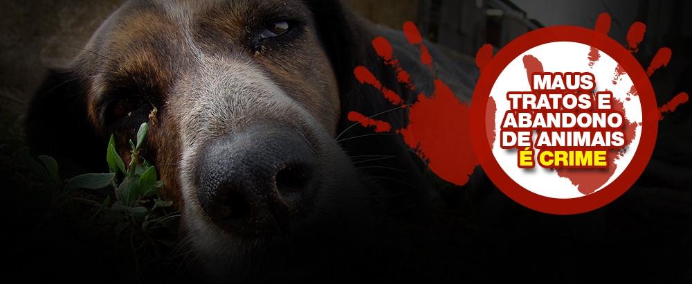 O Diario De Noticias Sobre Abandono De Animais Em 2014
