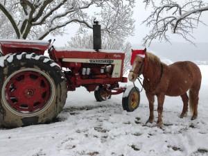 Photo Gallery Donaldson Farms