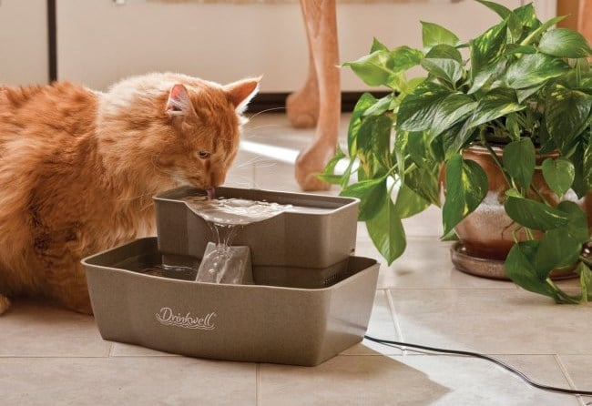 Water Over Bowl Cat Turns