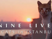 "Film: ""Nine Lives: Cats in Istanbul"""