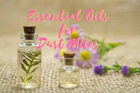 Effective Essential Oils to Kill Dust Mites  Including Easy DIY Spray  Essential Oils for Dust MItes