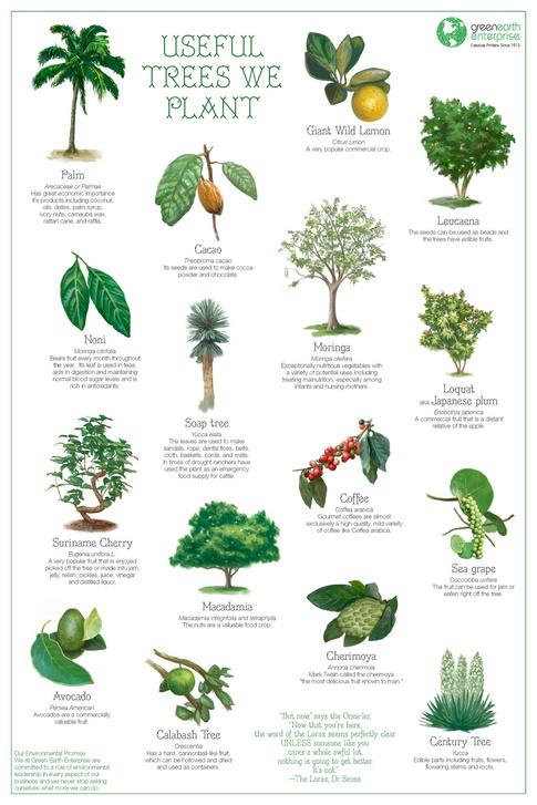 Useful Trees We Plant - Earth Enterprise - New York Printer