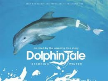 Dolphin Tale Movie Questions By Justine Wamsley Tpt
