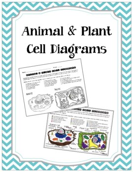 animal cell coloring page # 6