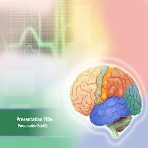 Amazon.com: Animated Brain Anatomy Powerpoint Template ...