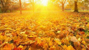Gele bladeren op aarde