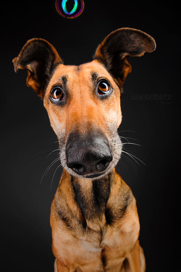 Goofy Goobers Commercial Pet Photography By Elke
