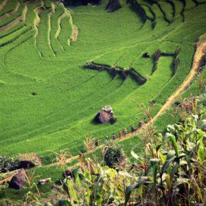 Vietnam | Liberalizacion mercado de energia | energia y medio ambiente