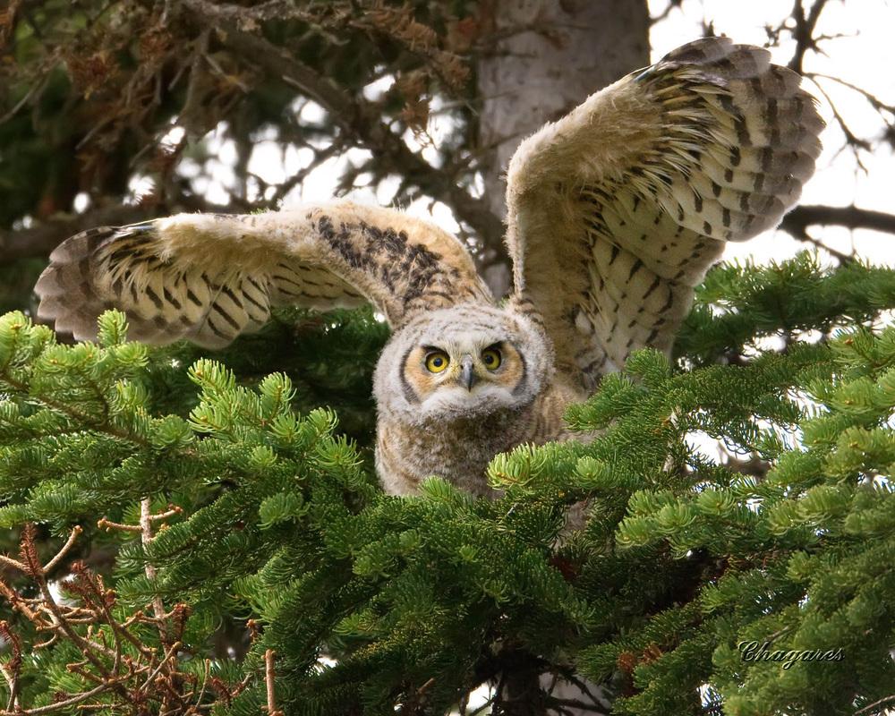 Habitat - Owls