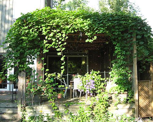 Vine Covered Pergola Emily S Garden
