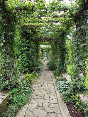 Clematis Covered Pergola Emily S Garden