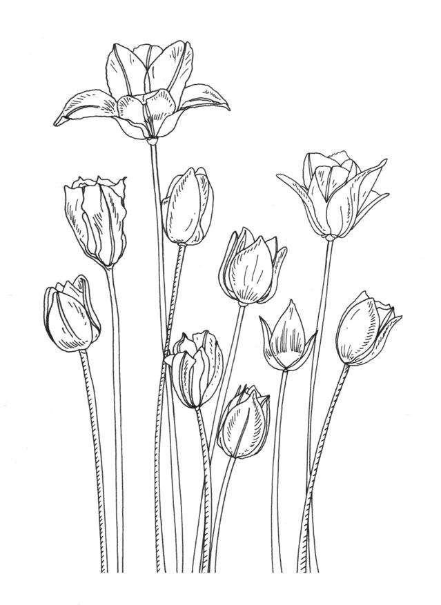 Flower Rubber Stamps Designs For Penny Black