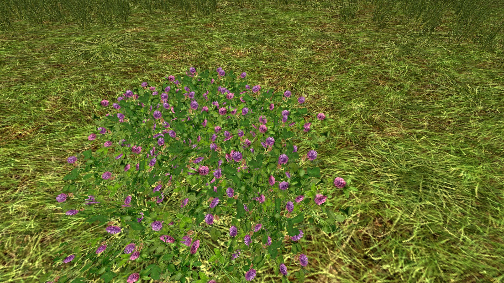 Patch of Purple Clover