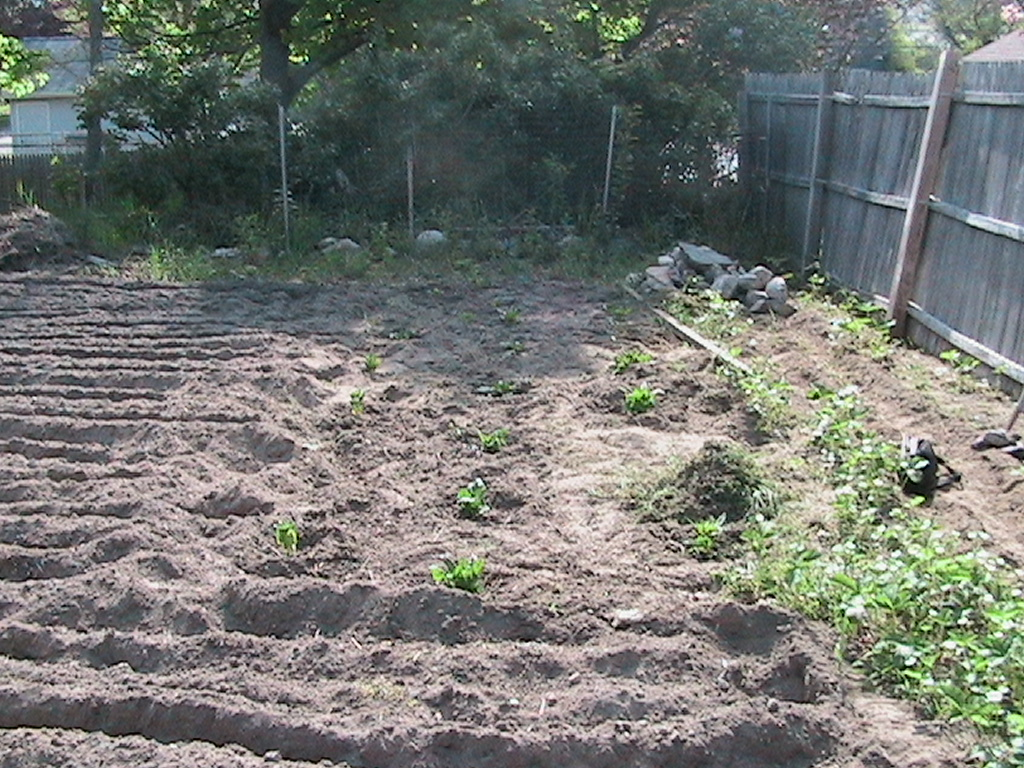 Tilling Leaves Garden Soil