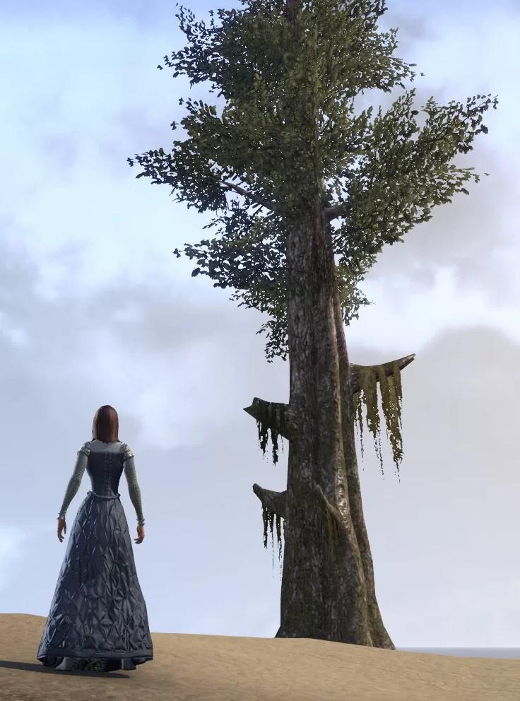 Eso Fashion Tree Giant Cypress Elder Scrolls Online