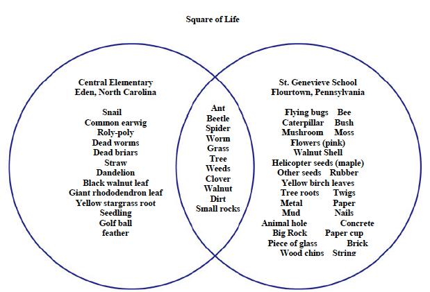 Bacteria Virus Venn Diagram Template