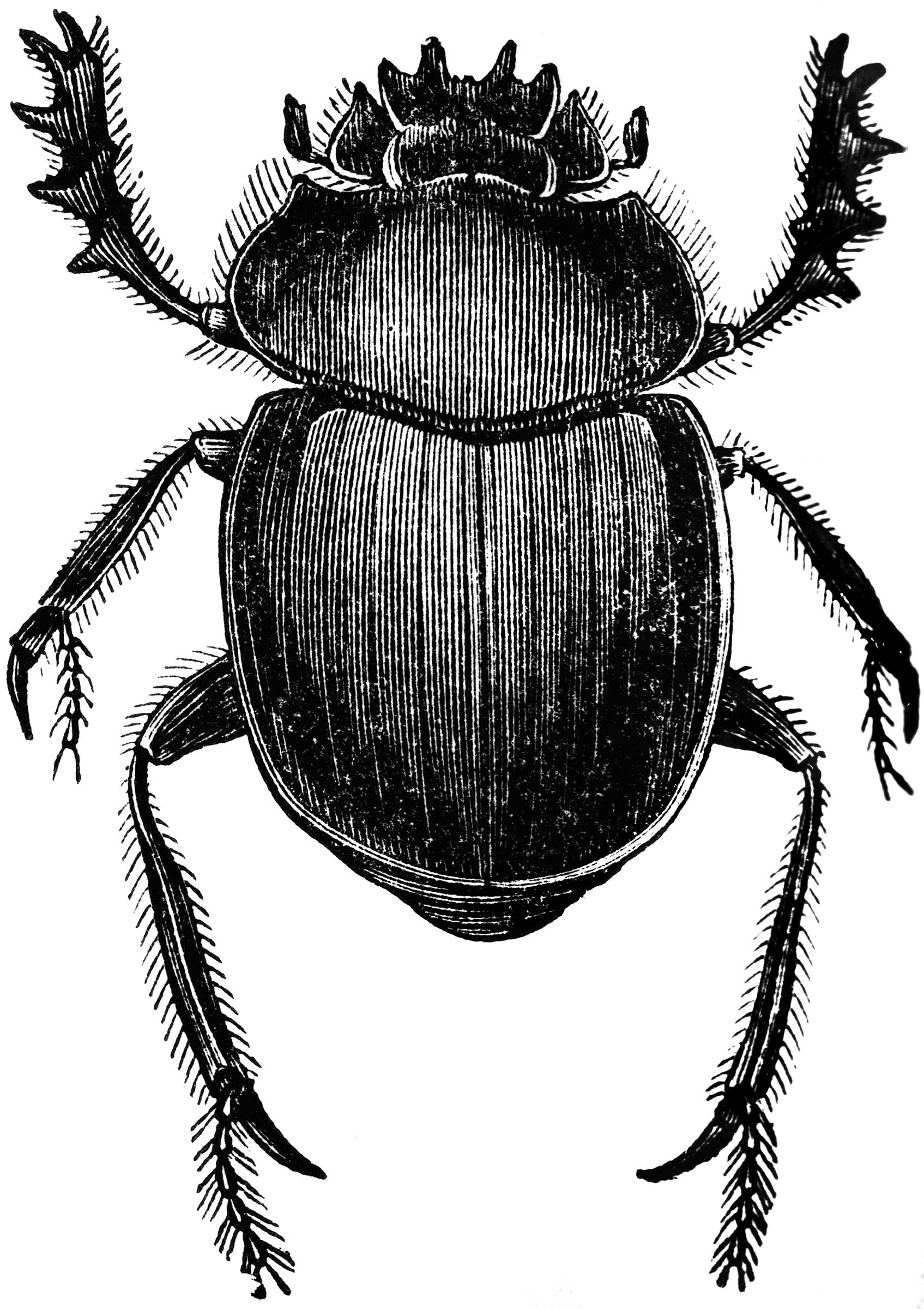 Dung Beetle Clipart Etc