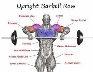Fitness Tip # 68 – Barbell Upright Row Exercise! | Evolve Gym