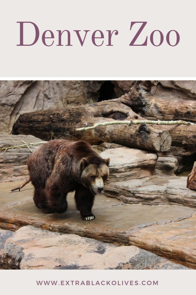 Colorado Springs Zoo Animals