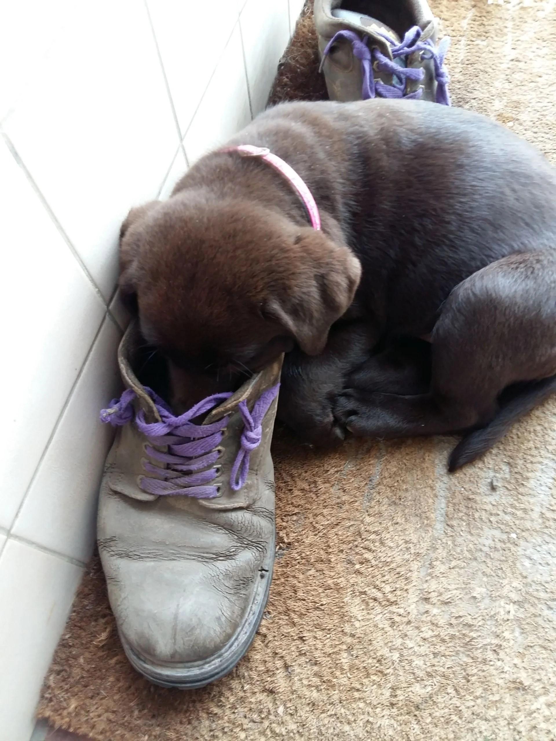 Grappige Foto S Foto Albums Finally Found You Labradors