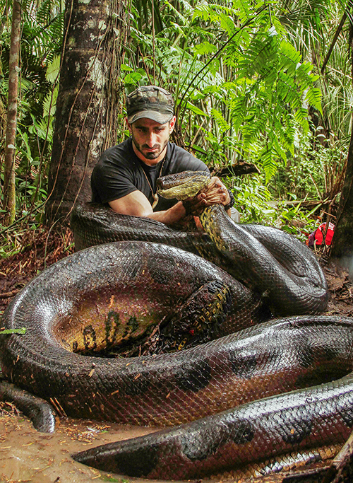 """For real? Man gets eaten by snake in Discovery's new """"Eaten Alive"""" - Channel Guide Magazine"""