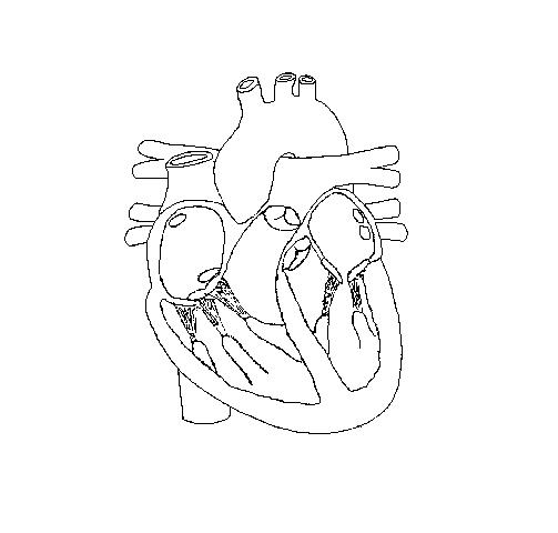 Unlabeled Cross Section Heart