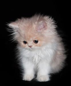 Fakta Om Katter Fakta Om Katter