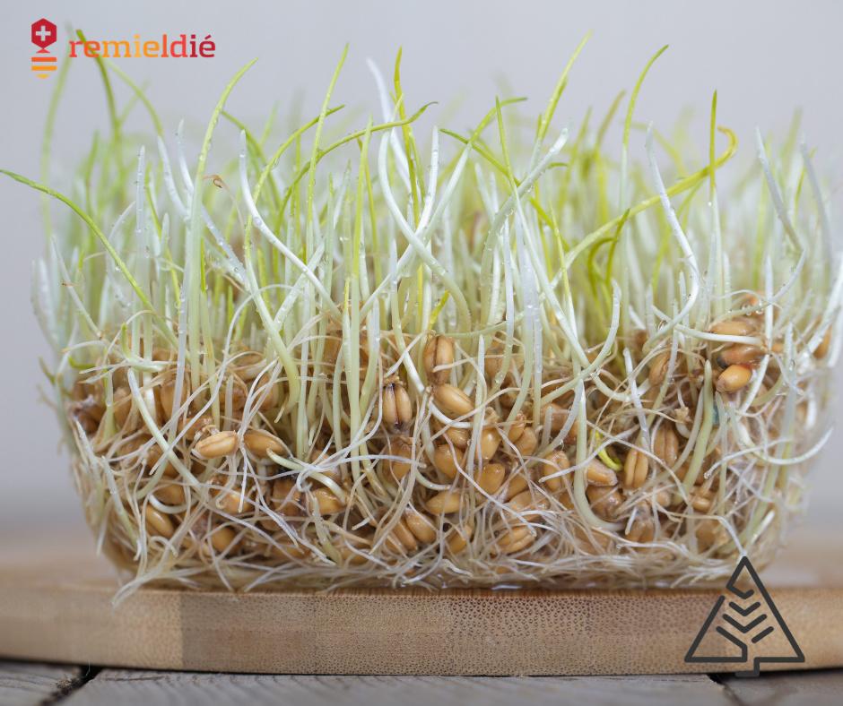 remedes naturels sante environnement ecologie pinextract bioleven remieldie