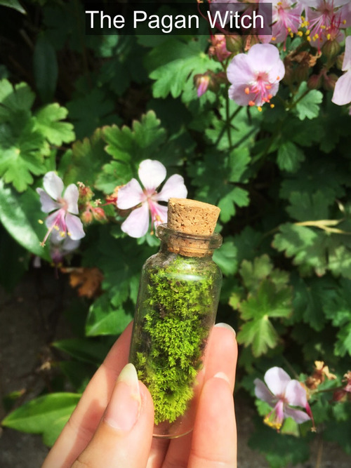 witchcraft witch naturewitch greenwitch plants moss flowers spring nature lucky luck money spells potions wiccan wicca spiritual Magic magick magical mystical mystic cute kawaii