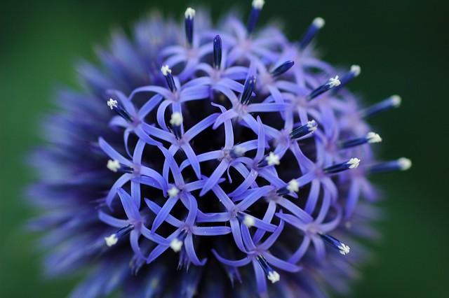 Kinds Garden Flowers