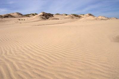 Texas Sand Dunes   South Padre Island, Texas   Stuart ...