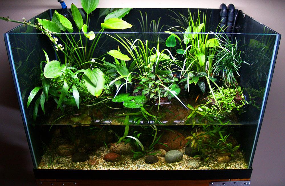 Aquarium Driftwood Canada