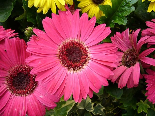 When Should I Plant My Flower Garden