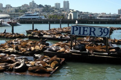 San Francisco - Fisherman's Wharf: Sea Lions at Pier 39 ...