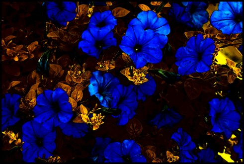 On Black   Wild  Flowers  gold and blue  by active metabolite  Medium   Wild  Flowers  gold and blue  by active metabolite