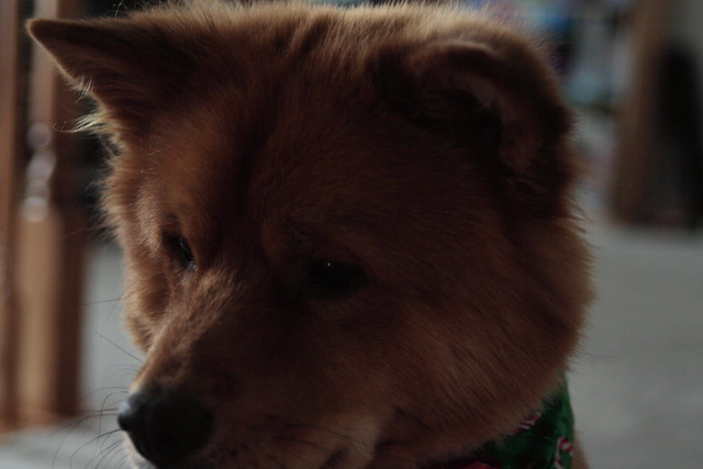 Fozzie Bear sitting patiently | Flickr - Photo Sharing!