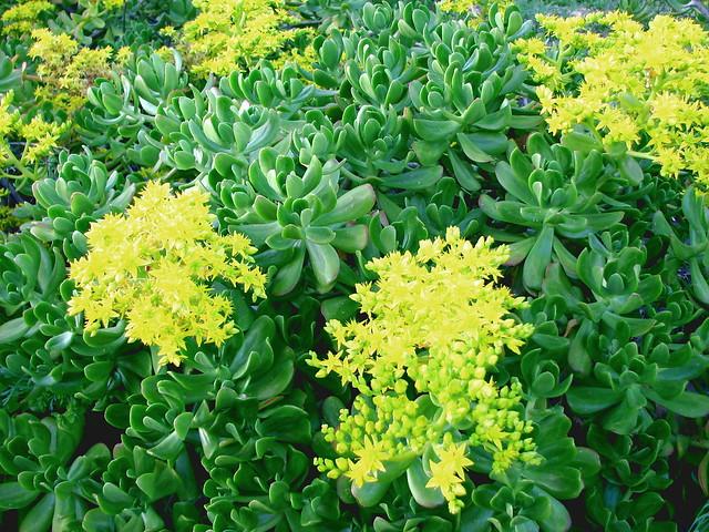 Water Garden Flowers