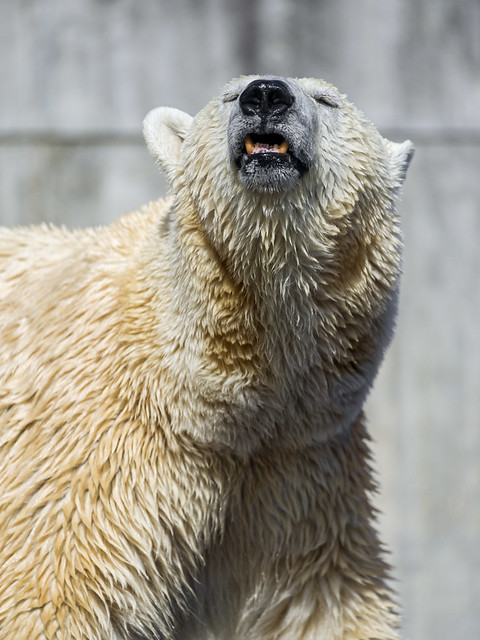 Bear with definition/meaning