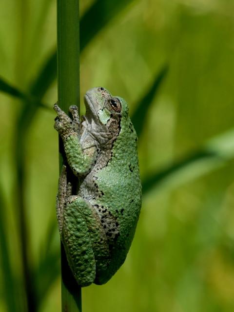Frogs Habitat World Map